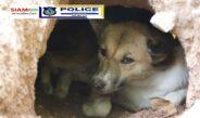 "((POLICE NEWS update PLUS))…""การดูแลสัตว์เลี้ยงในฤดูหนาว """